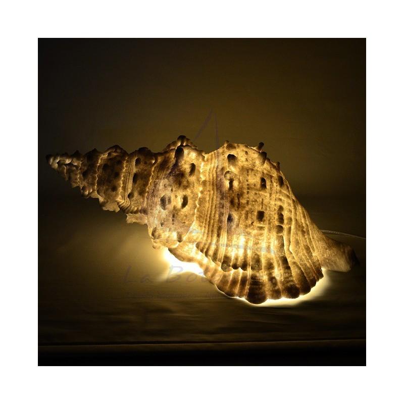70CM SHELL LAMP